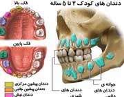 آشنایی با انواع دندان ها