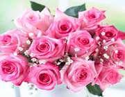 گل رز صورتي