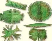 جلبکها در ابعاد میکروسکوپی