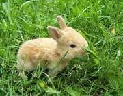 خرگوش و فرضیه