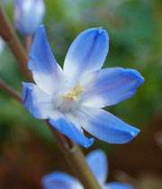 بهار و گل طرب انگیز گشت و توبه شکن