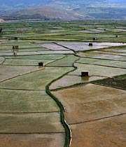 برداشت يك ميليون و ۴۵۰ هزار تن شلتوك برنج از شاليزارهاى مازندران