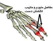 m_salehi664