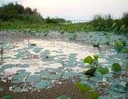 Энзелинский пруд