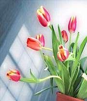 گل گلدون