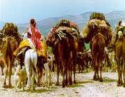 قبيلة قشقايي