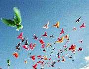 разноцветные голуби