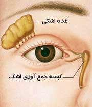 چه بیماری هایی با آلرژی چشمی اشتباه می شوند؟