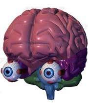 اطلاعات شگفت انگیز درباره چشم