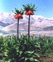 la nature de la province de chahar mahal et bakhtiari