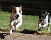 مسابقات سگها