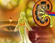 مراقبت از کلیه ها در دیابت