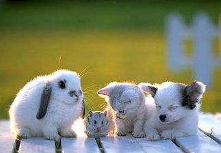 نی نی گولوهای حیوانات (1) تصویری