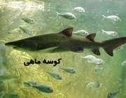 کوسه ماهي