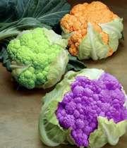 تولید گل کلم های نارنجی، ارغوانی و سبز