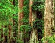 آینده جنگل های ایران