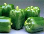 فلفل دلمه ای سبز