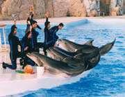 dolphin show in kish