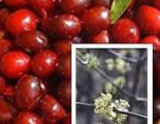 میوهها و سبزی های دوستدار قلب
