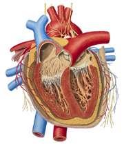 قلبهايي که در سينهي راست ميتپند