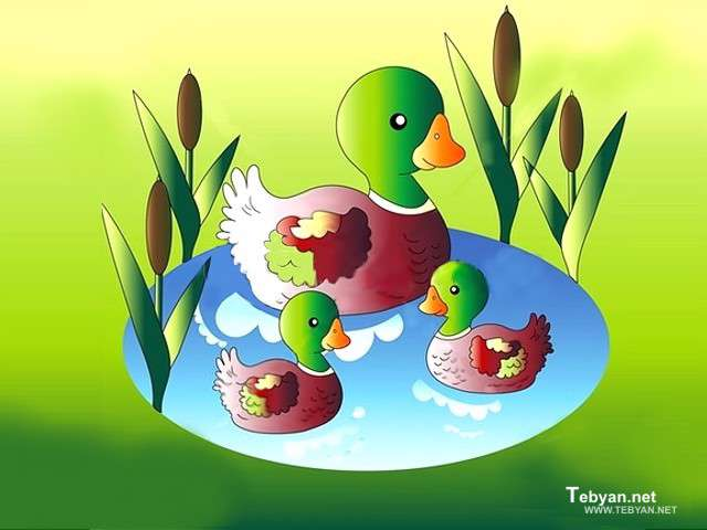 زندگی دو پرنده آبزی