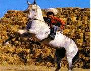 24056111342221653212162610061901851154 - ترکمن صحرا جواهری ناشناخته