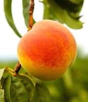 هر میوه ای در فصلش مغذی تر است