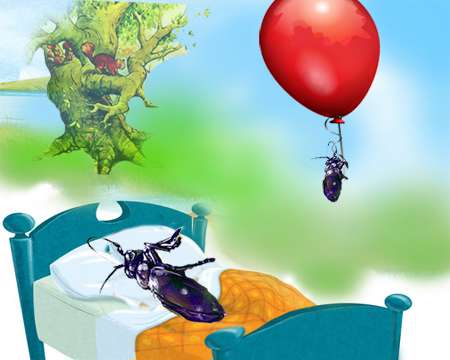 یک خواب سوسکی