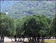 قطع 10 هزار درخت در منطقه حفاظت شده دنا