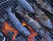 کباب کردن ماهی