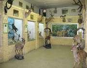 متحف التاریخ الطبیعي (موزه تاریخ طبیعی)