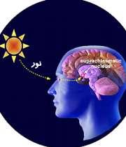 تولید ملاتونین در بدن