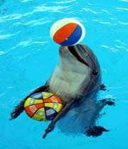جشن تولد دلفین کوچولو