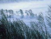 nature-wind