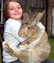 بزرگترین خرگوش جهان