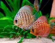 آیا ماهی ها می توانند بو بکشند؟