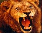 حیواناتی برای اندرز دادن!(2)