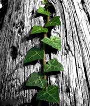 زندگي را درياب در درخت انديشه ها