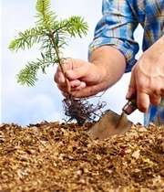 درختکاری