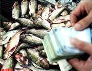 توصیه هایی برای خرید ماهی شب عید