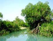 الغابة الجميلة في جزيرة قشم
