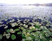 sarab niloofar (wetland)