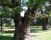 درخت طوبی چست و کجاست؟