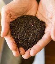 طرز تشخیص چای سالم و خوب