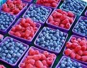رژیم غذایی قرمز ـ بنفش یعنی چه؟