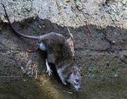 موشهای بلژیكی در تهران