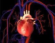 افزایش بیماری های قلبی در زنان شاغل