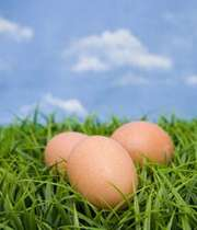 تخم مرغ طبیعی