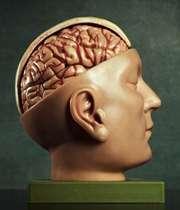 دوپینگ مغزی با 7 ماده غذایی