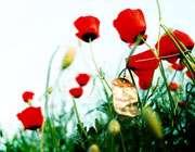 توپ جنگ در زمین شاعران جوان